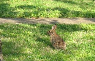 Bunny close