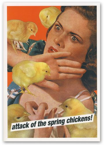 Attack of the spring chickens