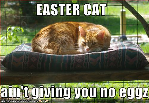 Easter cat ain't giving you no eggs