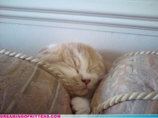 Dreaming of Kittens – Cute Sleeping Kittens