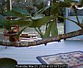 The Cat Pavilion WebCam