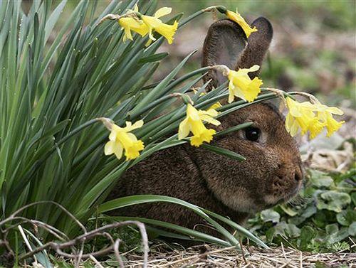 Springbunny